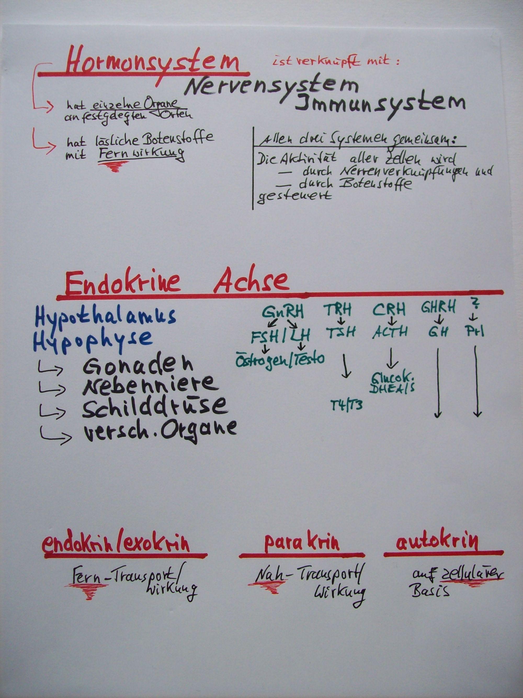 Wunderbar Menschliche Hormonsystem Fotos - Menschliche Anatomie ...
